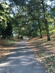 An untrodden path