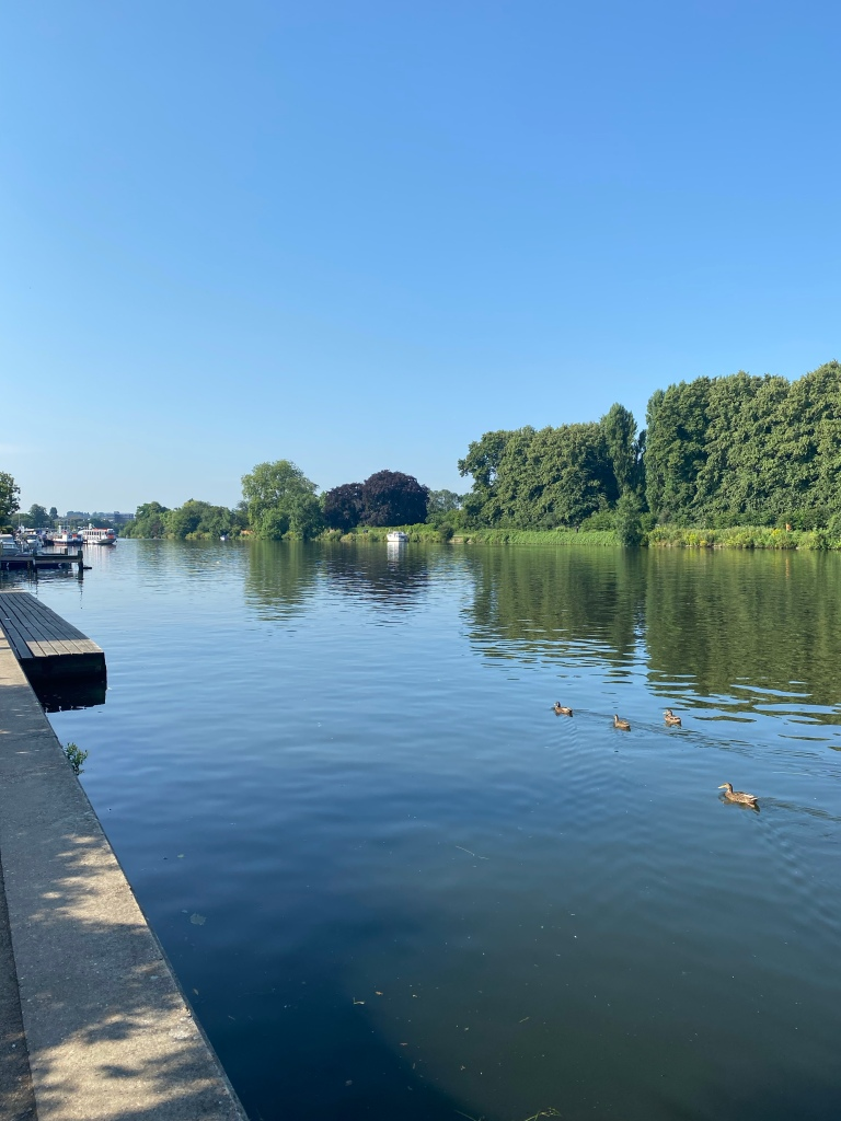 The river on a sunny day, with four ducks swimming, trees lining the right hand-side of the river