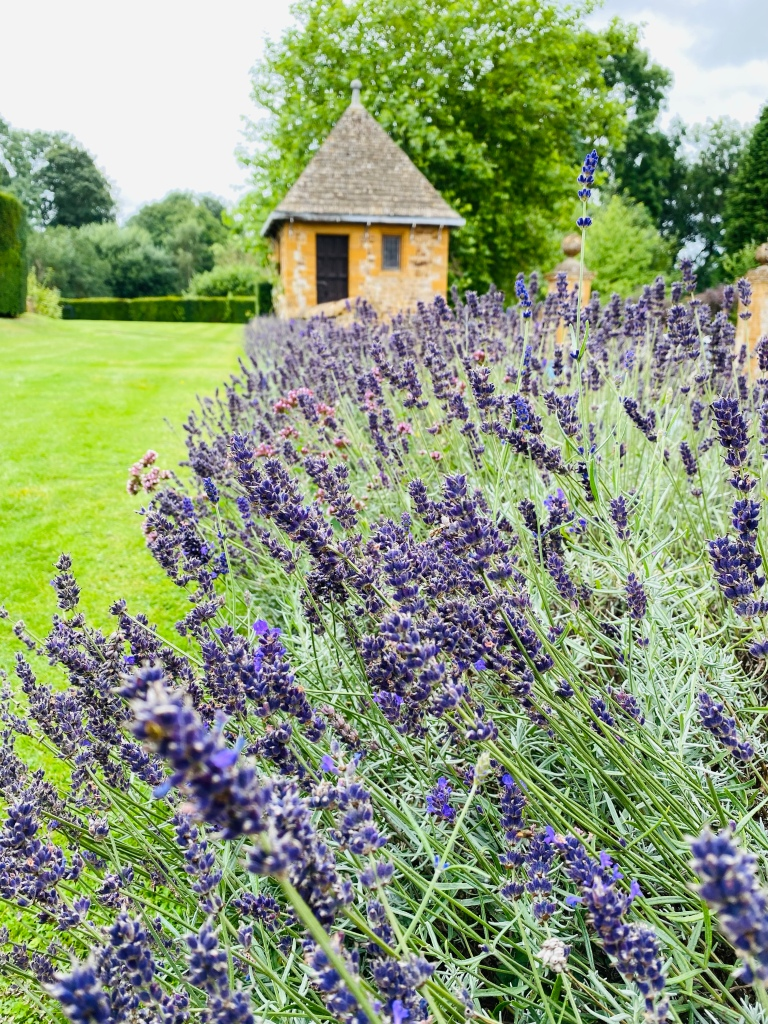 A display of lavender in a flower bed which leads up to a small brick building in the background