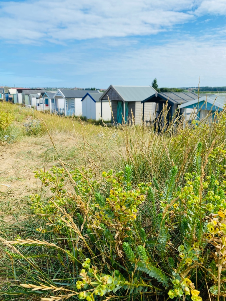 A long row of beach huts taken from behind some foliage in the sand dunes
