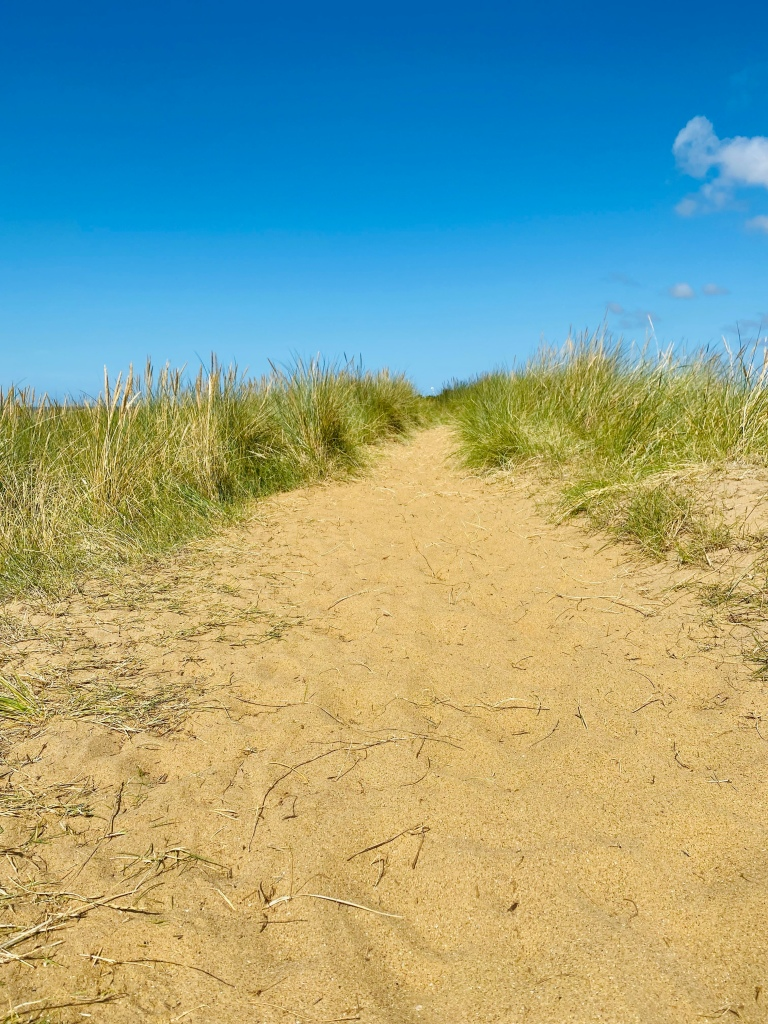 A sandy path leading through the grassy/sandy dunes