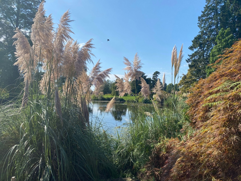 Pampas grass in the foreground with a pond the other side. The sky is bright blue and there is a black spec in the air which is a bird