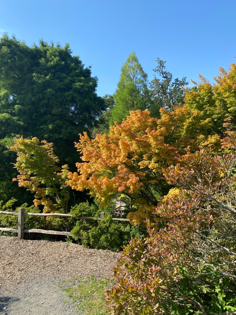 Autumnal trees surrounding a wooden fence. The trees are an assortment of greens and yellows