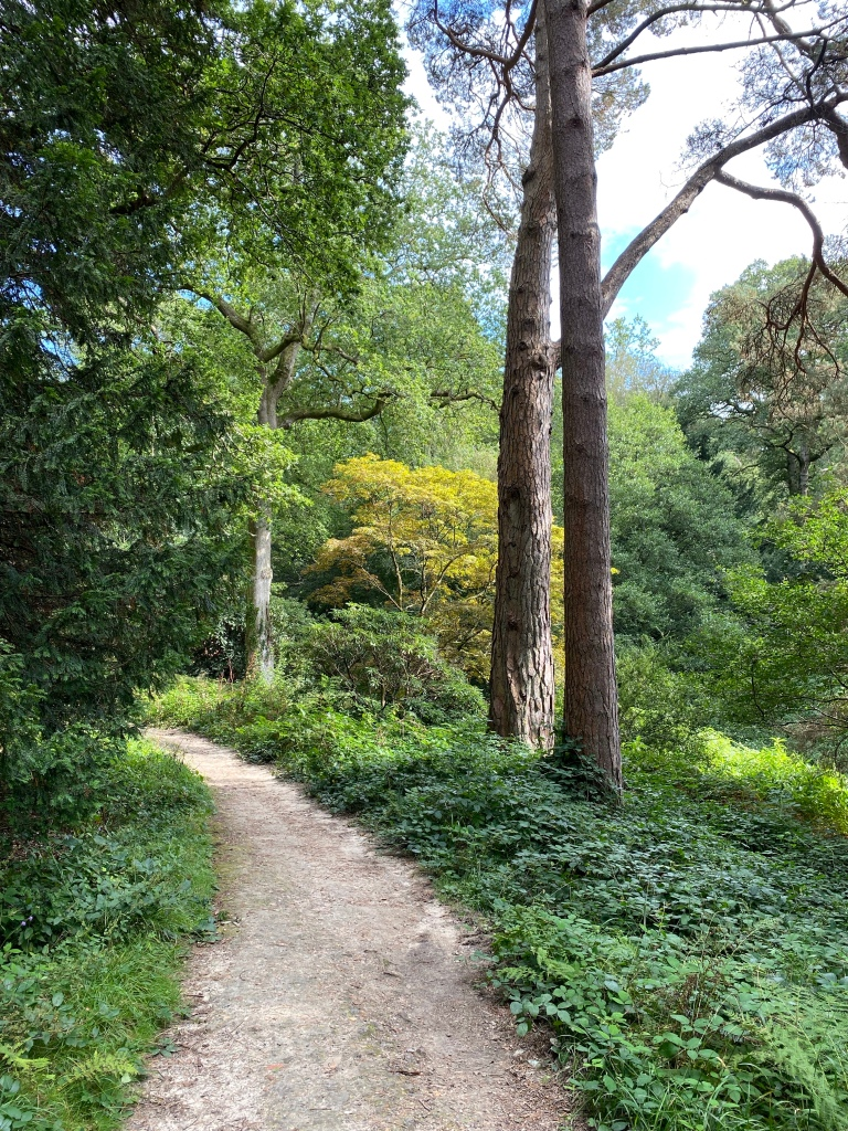A pathway between trees with green foliage either side of the path